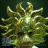 Maschera plastica sole oro
