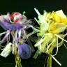 Bouquet 3 portaconfetti con rosa