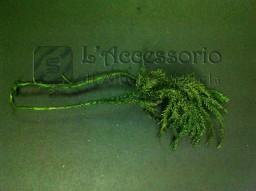 Muschio verde
